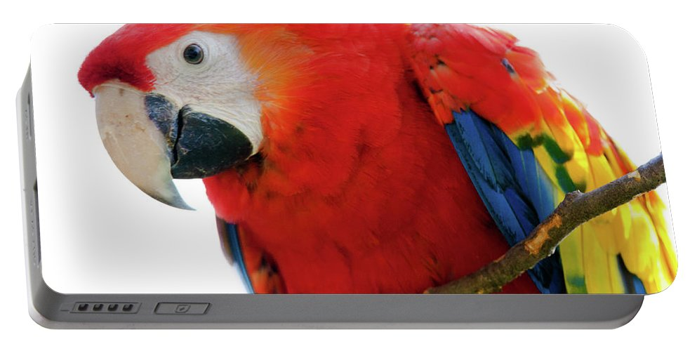 Parrot Portable Battery Charger featuring the photograph Parrot by Hristo Shanov