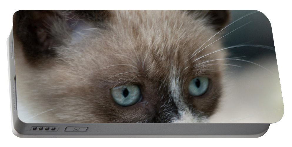 Cat Portable Battery Charger featuring the photograph Pauls Little Cat by Heiko Koehrer-Wagner