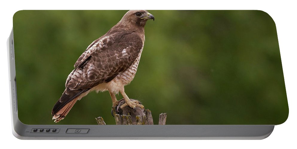 Birds Portable Battery Charger featuring the photograph Red-tailed Hawk by Doug Herr
