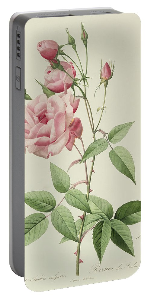 Rosa Portable Battery Charger featuring the drawing Rosa Indica Vulgaris by Pierre Joseph Redoute