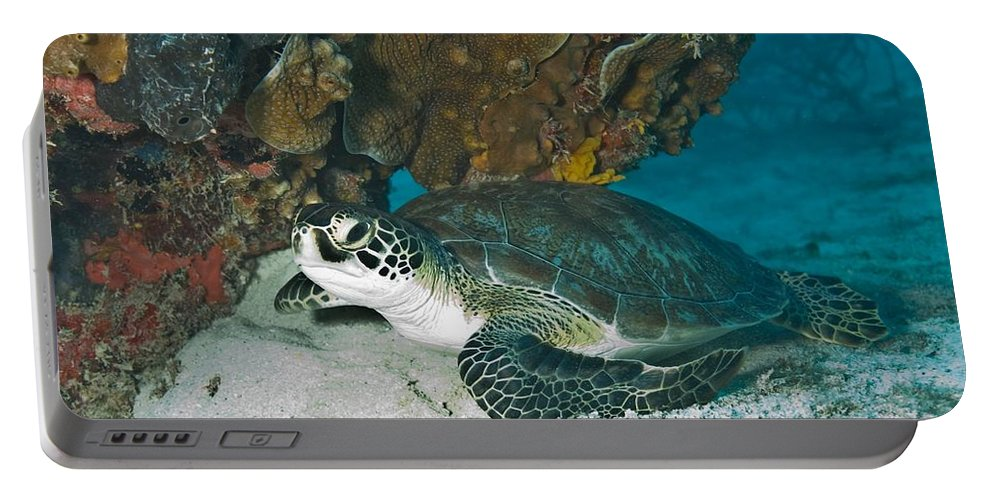 Underwater Portable Battery Charger featuring the photograph Sea Turtle by FL collection
