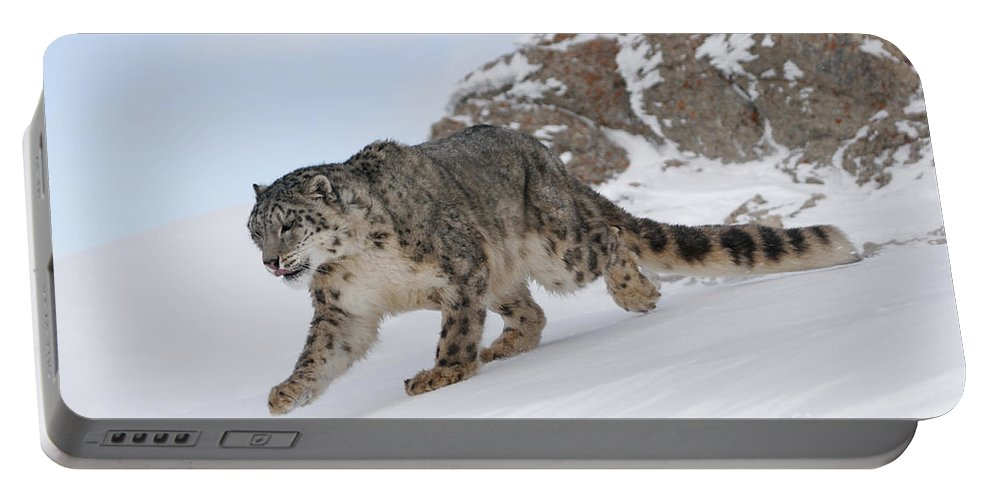 Snow Leopard Portable Battery Charger featuring the photograph Snow Leopard by Jean-Louis Klein & Marie-Luce Hubert