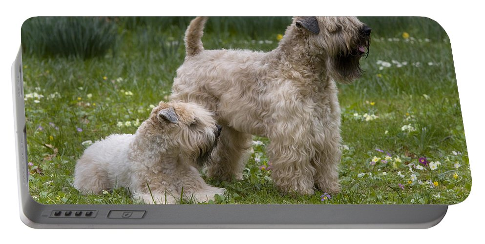 Soft-coated Wheaten Terrier Portable Battery Charger featuring the photograph Soft-coated Wheaten Terriers by Jean-Louis Klein & Marie-Luce Hubert