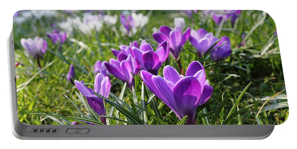 Spring Crocuses Portable Battery Charger featuring the photograph Spring Crocuses by Julia Gavin