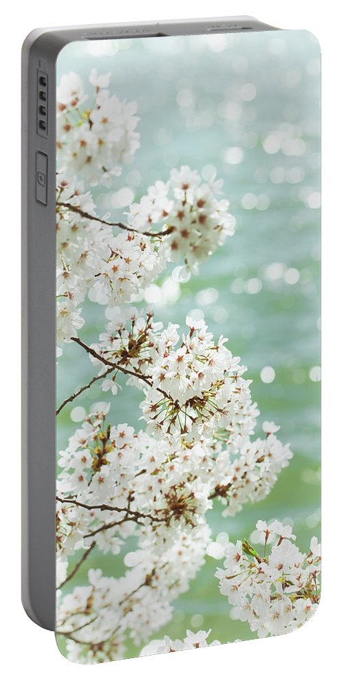 Aqua Portable Battery Charger featuring the photograph White Cherry Blossoms Trees by Leslie Banks