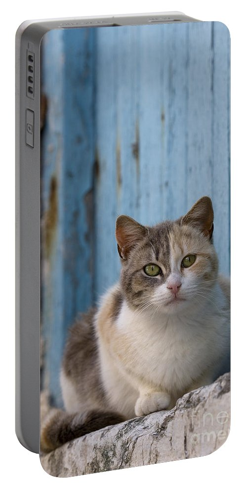 Cat Portable Battery Charger featuring the photograph Cat In A Doorway, Greece by Jean-Louis Klein & Marie-Luce Hubert
