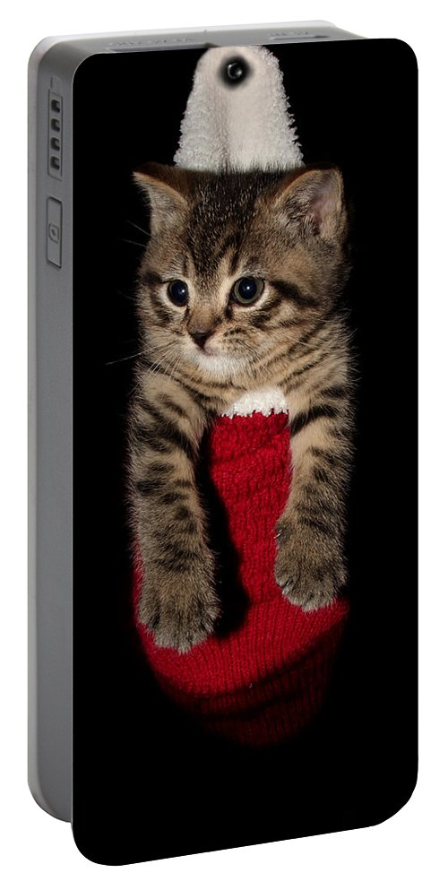 Animal Portable Battery Charger featuring the photograph 2010 Stocking Cat 2 by Robert Morin