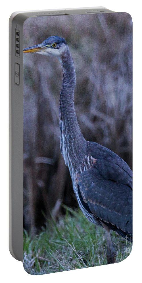 Blue Heron Portable Battery Charger featuring the photograph 2018_3_09 Blue Heron-5652 by Roger Patterson