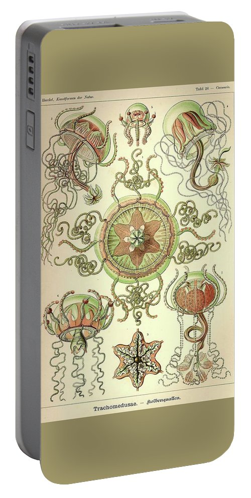 Vintage Portable Battery Charger featuring the drawing Vintage Zoological by Ernst Haeckel