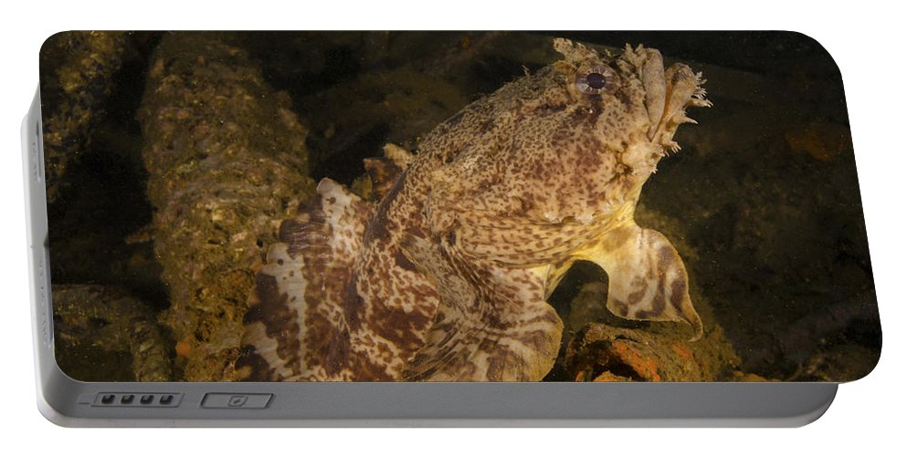 Portable Battery Charger featuring the photograph Untitled by