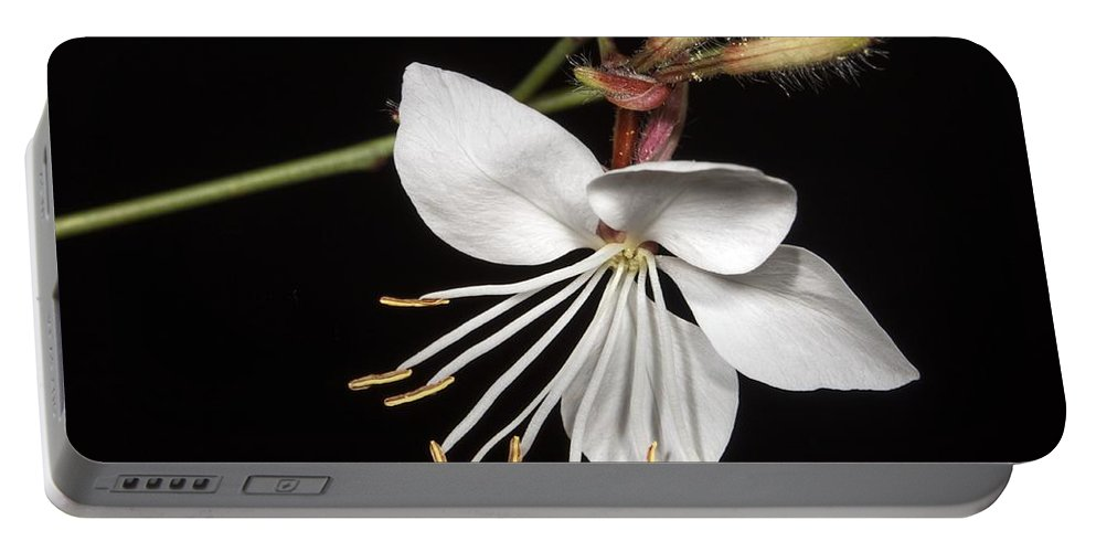 Flower Portable Battery Charger featuring the photograph Flower by FL collection