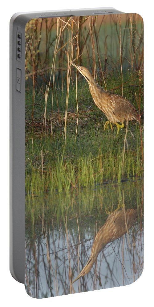 Bittern Portable Battery Charger featuring the photograph American Bittern Along The Shore by Mark Wallner