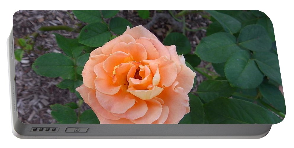 Australia Portable Battery Charger featuring the photograph Australia - Orange Rose Flower by Jeffrey Shaw