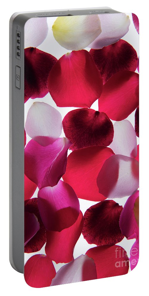 Back Lit Portable Battery Charger featuring the photograph Back Lit Flower Petals 1 by Dan Yeger