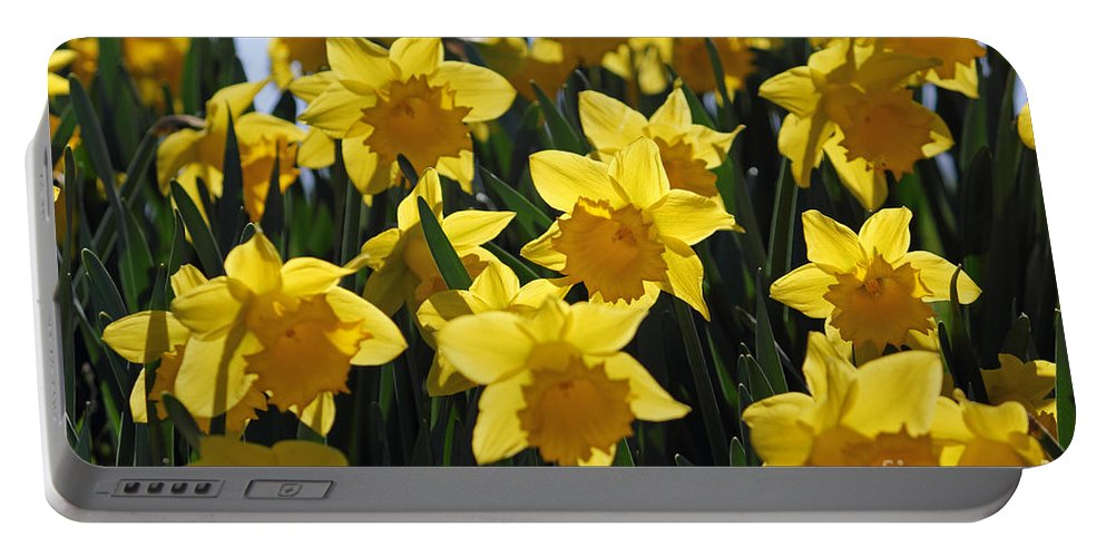 Daffodils In The Sunshine Portable Battery Charger featuring the photograph Daffodils In The Sunshine by Julia Gavin