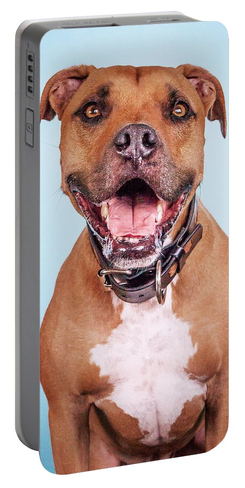 Dog Portable Battery Charger featuring the photograph Dexter by Pit Bull Headshots by Headshots Melrose