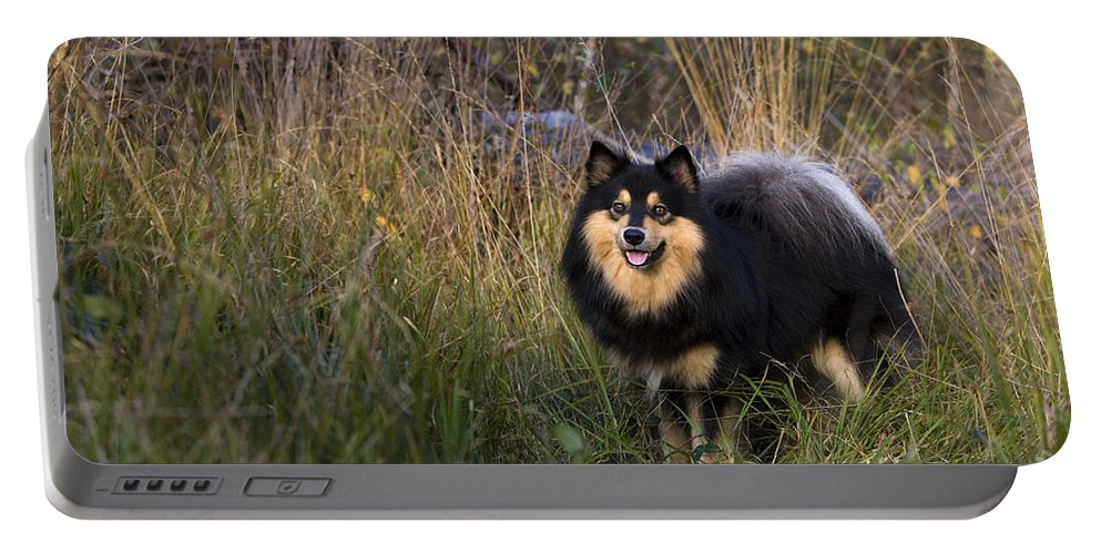 Lapinkoira Dog Portable Battery Charger featuring the photograph Finnish Lapphund by Jean-Louis Klein & Marie-Luce Hubert