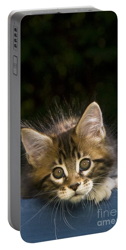 Maine Coon Cat Portable Battery Charger featuring the photograph Maine Coon Kitten by Jean-Louis Klein & Marie-Luce Hubert
