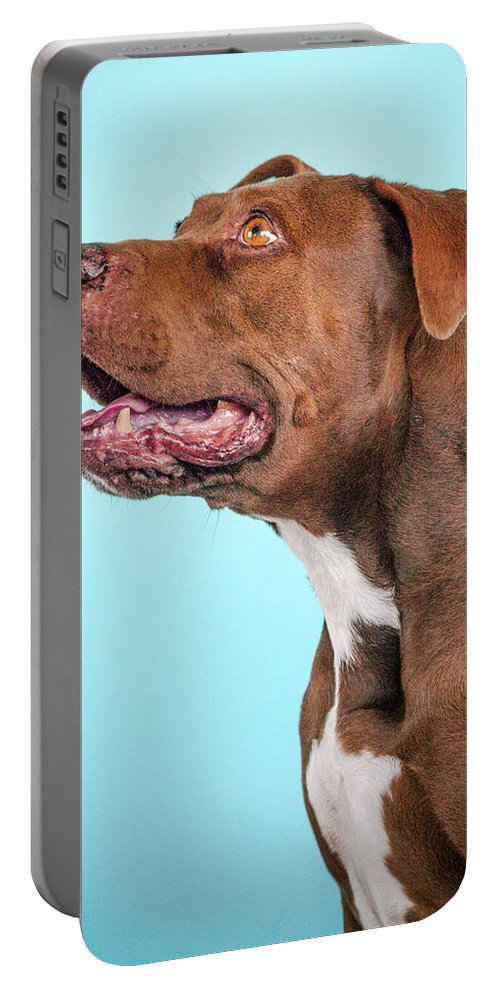 Dog Portable Battery Charger featuring the photograph Metta by Pit Bull Headshots by Headshots Melrose