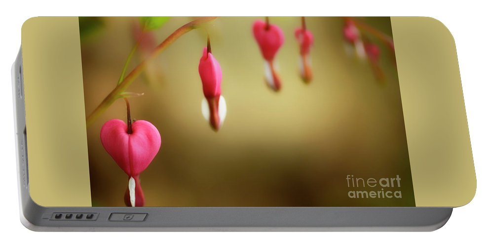 Old-fashioned Bleeding Heart Portable Battery Charger featuring the photograph Old-fashioned Bleeding Heart by Thomas R Fletcher