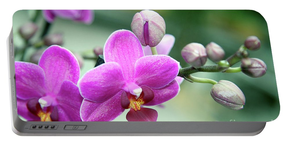 Orchid Portable Battery Charger featuring the photograph Pink Orchid by Lali Kacharava