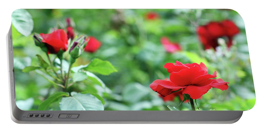 Rose Portable Battery Charger featuring the photograph Red Roses Garden Spring Season by Goce Risteski