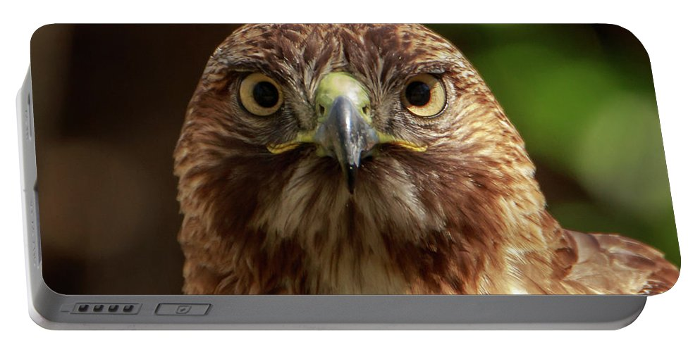 Hawk Portable Battery Charger featuring the photograph Red Tailed Hawk by Andrew Reinhart