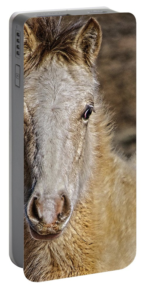 Santa Portable Battery Charger featuring the photograph Red Willow Pony by Charles Muhle