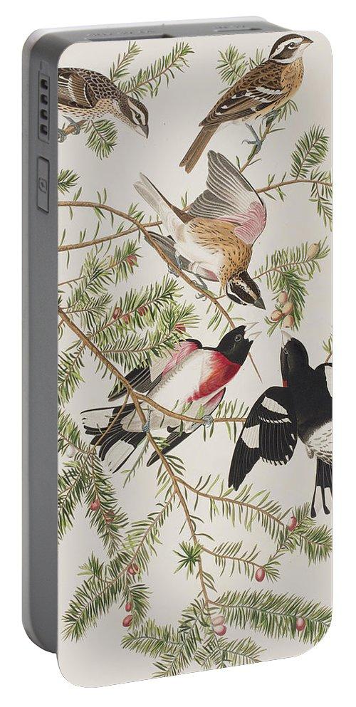 Grosbeak Portable Battery Charger featuring the painting Rose-breasted Grosbeak by John James Audubon