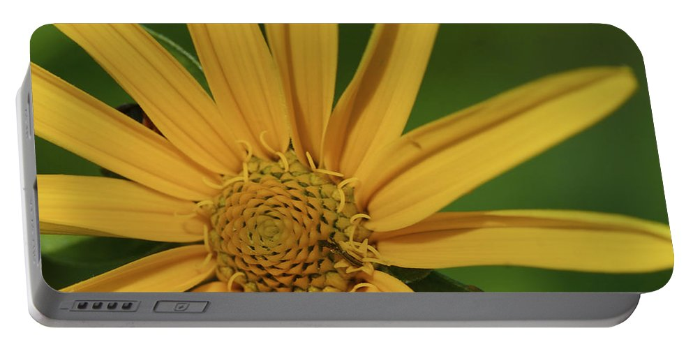 Beautiful Portable Battery Charger featuring the photograph Sunflower by Jack R Perry
