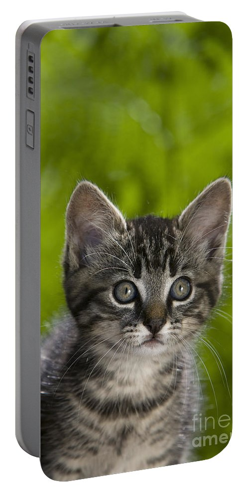 Cat Portable Battery Charger featuring the photograph Tabby Kitten by Jean-Louis Klein & Marie-Luce Hubert