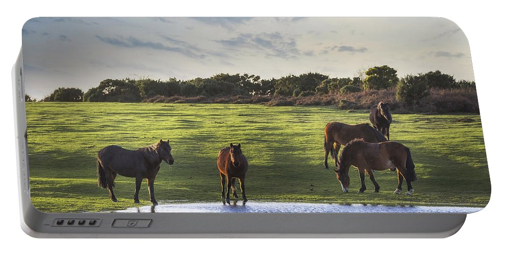 New Forest Portable Battery Charger featuring the photograph New Forest - England by Joana Kruse