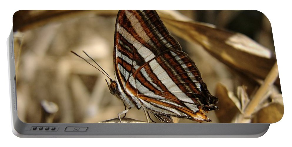 Butterfly Portable Battery Charger featuring the photograph Butterfly by FL collection