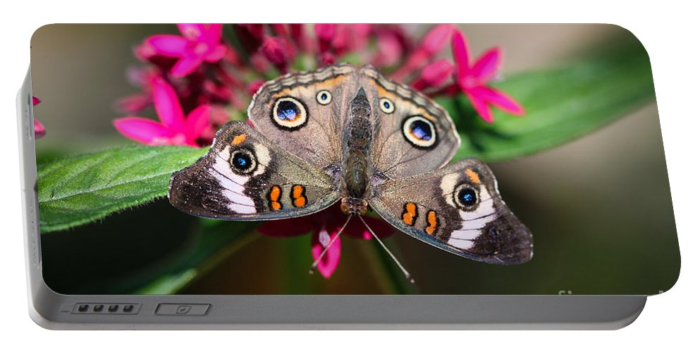 Butterfly Portable Battery Charger featuring the photograph Common Buckeye Junonia Coenia by Henrik Lehnerer