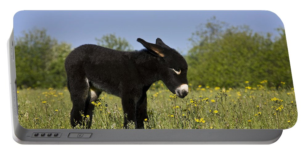 Grand Noir Du Berry Portable Battery Charger featuring the photograph Donkey Foal by Jean-Louis Klein & Marie-Luce Hubert