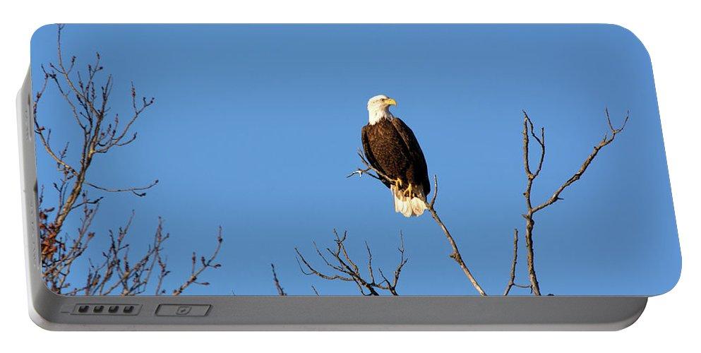 Bald Eagle Portable Battery Charger featuring the photograph Eagle by Linda Kerkau
