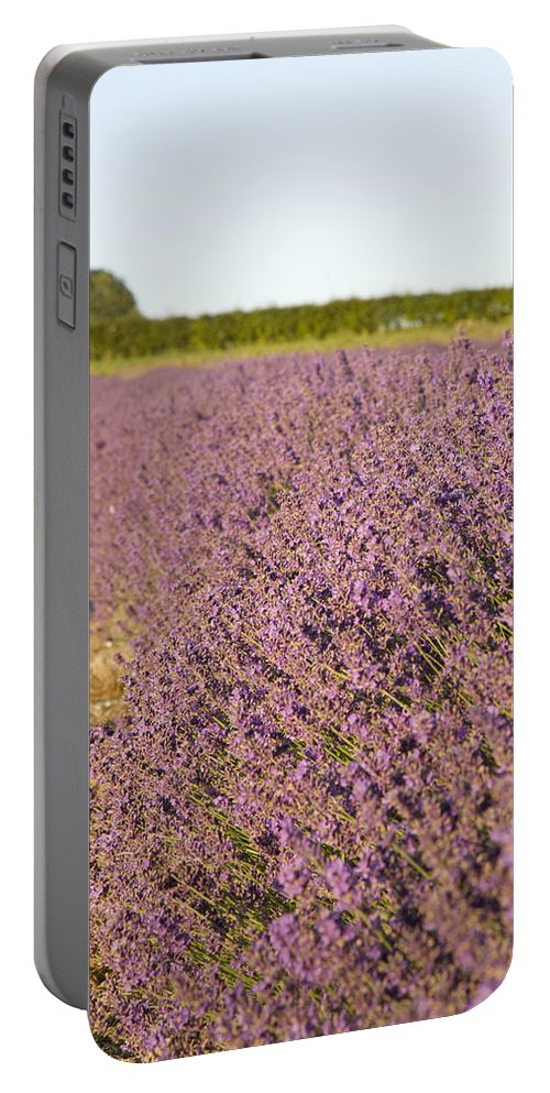 Lavender Portable Battery Charger featuring the photograph Lavender Fields by Ian Middleton
