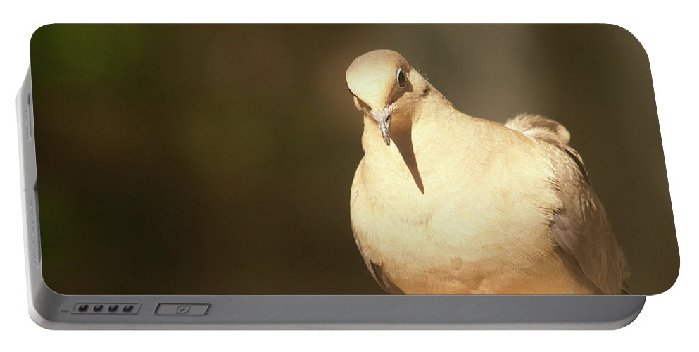 Mourning Dove Portable Battery Charger featuring the photograph Mourning Dove by Diane Schuler