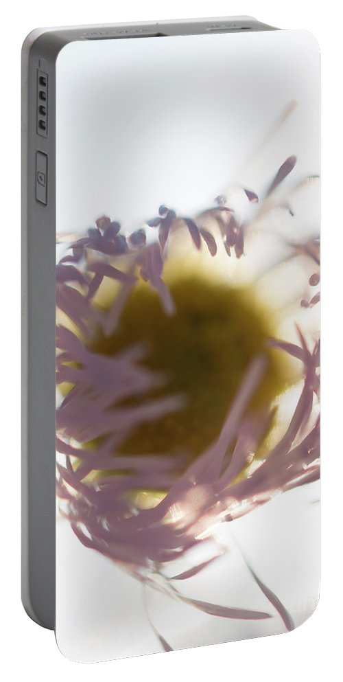 Purple Portable Battery Charger featuring the photograph Pastel Purple Flowers by Michelle Himes