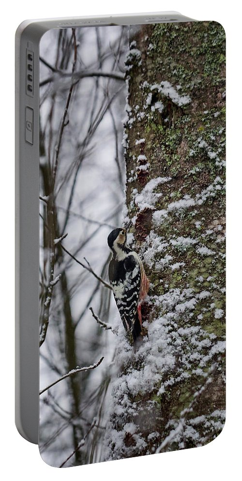 Dendrocopos Leucotos Portable Battery Charger featuring the photograph White-backed Woodpecker by Jouko Lehto
