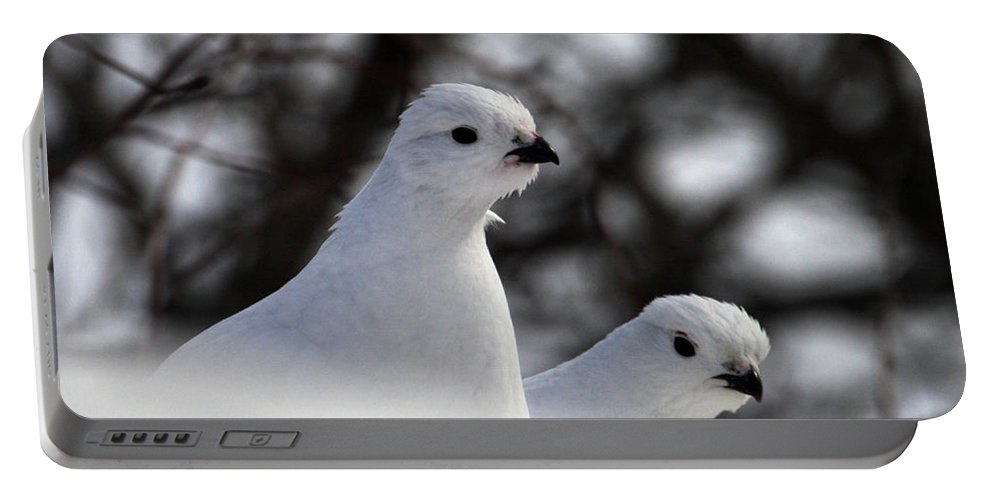 Doug Lloyd Portable Battery Charger featuring the photograph Willow Ptarmigan by Doug Lloyd