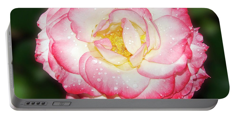 Flowers Portable Battery Charger featuring the photograph Nice Rose by Elvira Ladocki