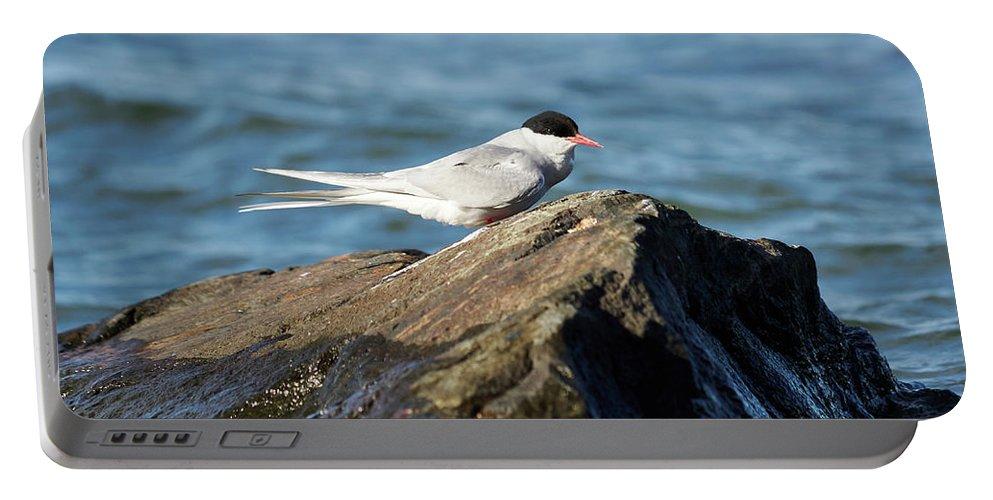 Jouko Lehto Portable Battery Charger featuring the photograph Arctic Tern by Jouko Lehto
