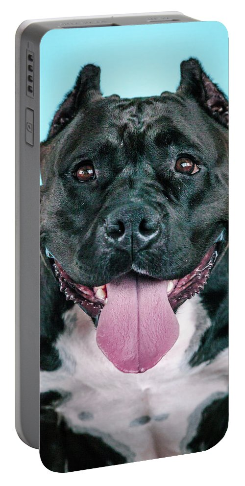 Dogs Portable Battery Charger featuring the photograph Brooklyn by Pit Bull Headshots by Headshots Melrose