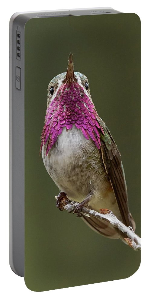 Birds Portable Battery Charger featuring the photograph Calliope Hummingbird by Doug Herr