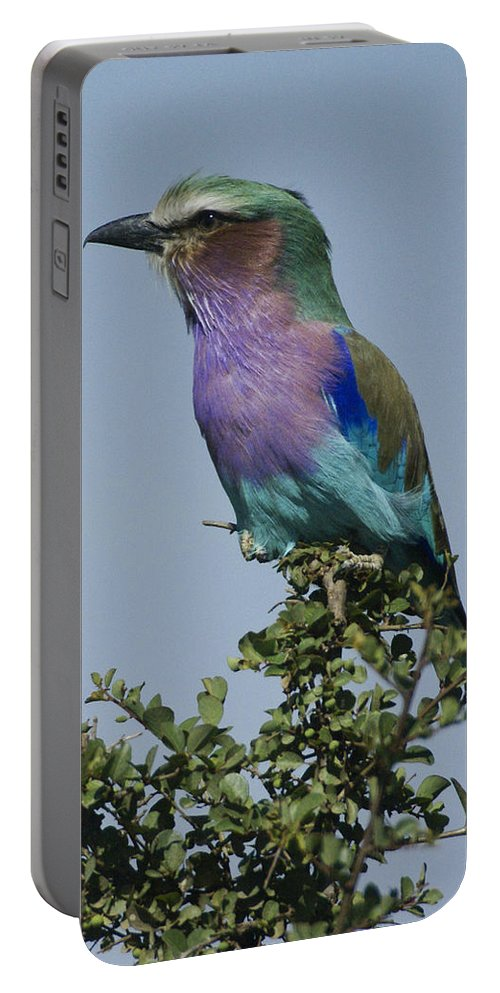Africa Portable Battery Charger featuring the photograph Lilac-breasted Roller by Michele Burgess