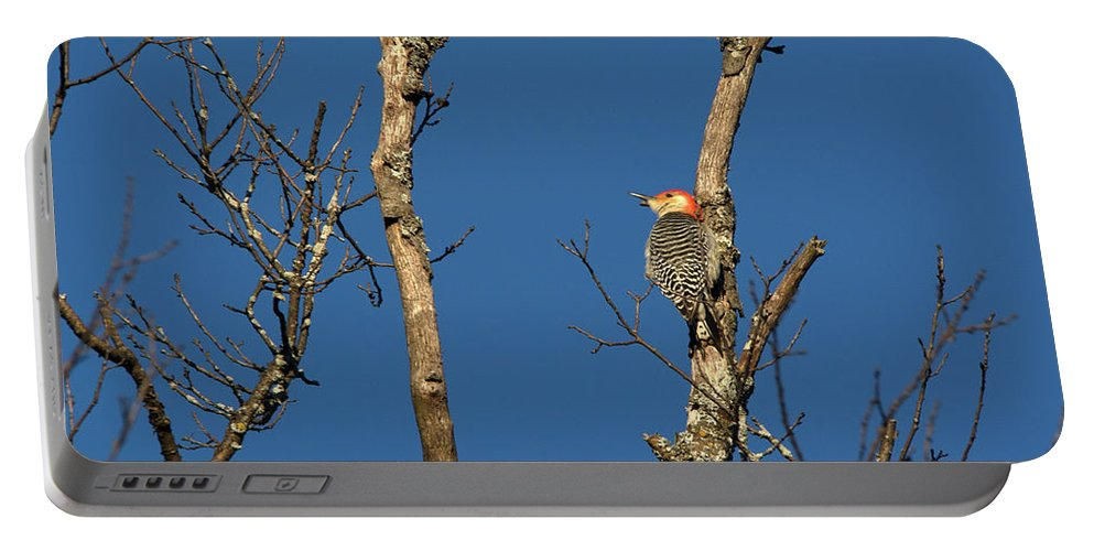 Red Bellied Woodpecker Portable Battery Charger featuring the photograph Perched by Linda Kerkau