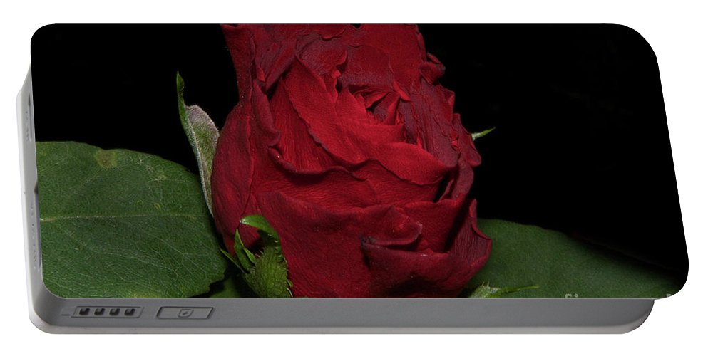 Flowers Portable Battery Charger featuring the photograph Red Rose by Elvira Ladocki