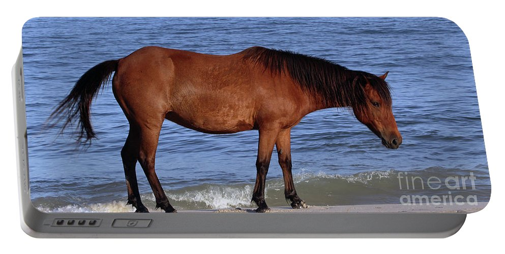 Horses Portable Battery Charger featuring the photograph 568a by Timm Andrews
