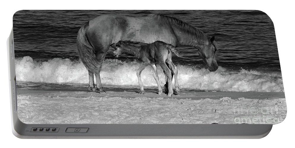Horses Portable Battery Charger featuring the photograph 569b by Timm Andrews